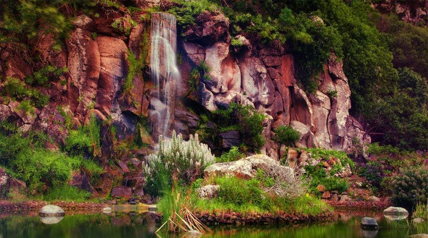 Jardin Canario. © hefegraphie