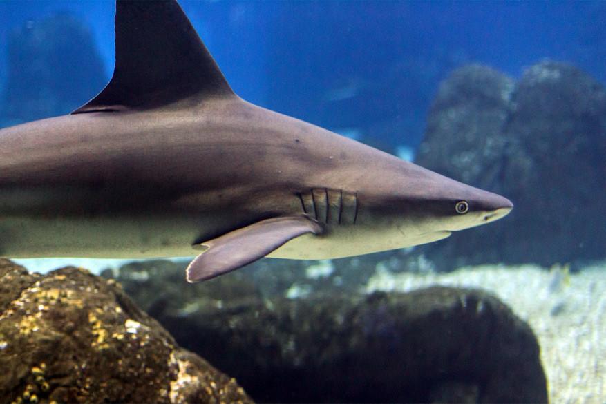 Slapen bij haaien in Oceanário. © Bobo Boom via Flickr Creative Commons