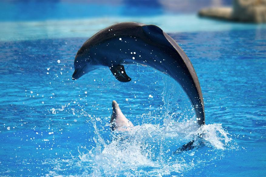 Geniet van een dolfijnenshow in de dierentuin. © Dmitry Valberg via Flickr Creative Commons