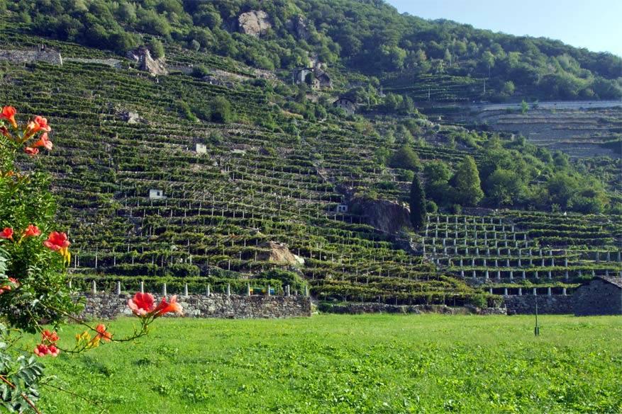De wijngaarden van Donnas. © Wikimedia Commons