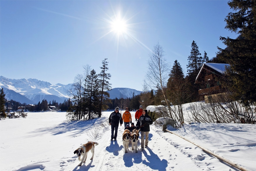 Familietip: winterwandelen met Sint-bernardshonden in Zwitserland