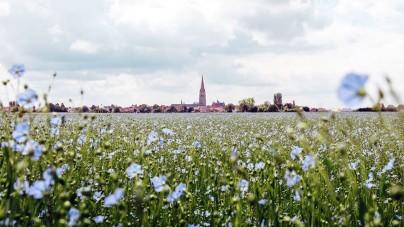 Op zoek naar de Vlaamse roots in Hondschoote