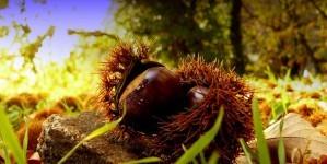 De Ardèche voor lekkerbekken