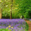 Engeland-tuinenfeature
