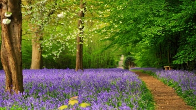 Voorjaarsuitje: tuinen kijken in Kent
