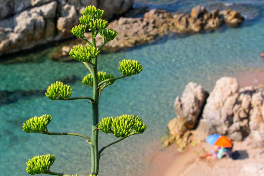 Calella: na een stranddag kun je helemaal uit de bol gaan in het centrum. © Toerisme Calella