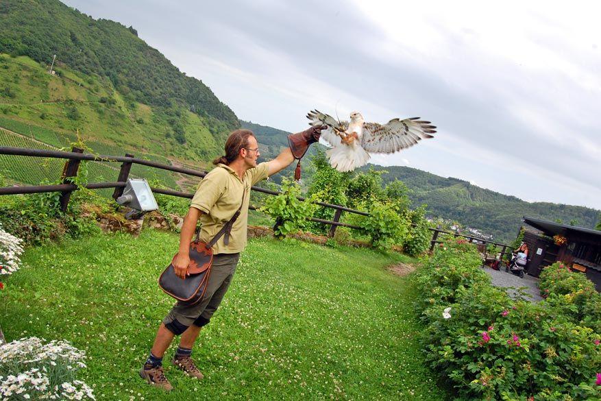 Een tip voor de kinderen: adelaars spotten!