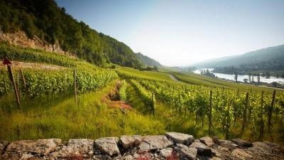 Parels van schuimwijnen in de Luxemburgse Moezelvallei
