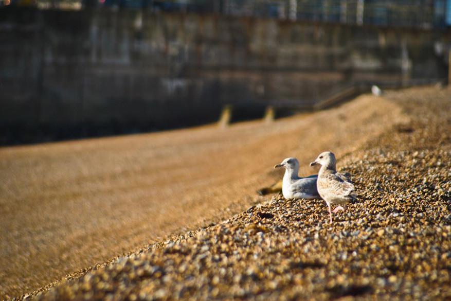 Kom tot rust aan de kustlijn van Dover.