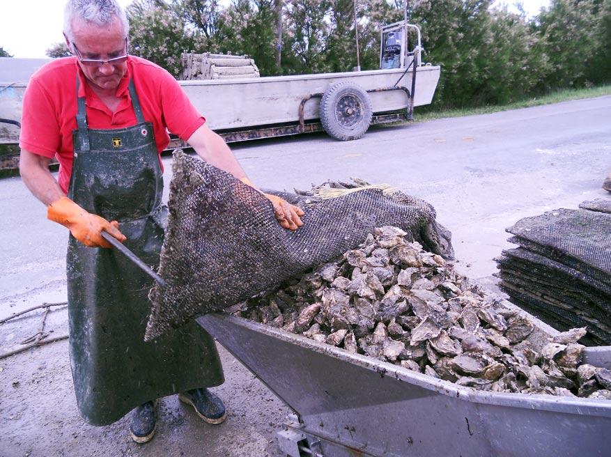 Lekkere oesters bij de vleet!