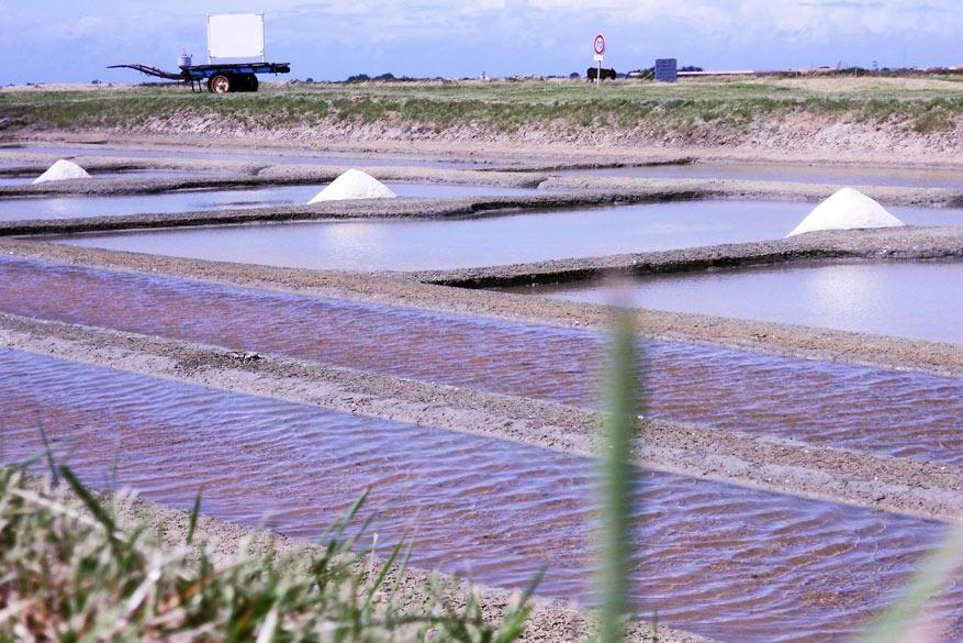 De zoutwinningspolders zijn van Vlaamse makelij.