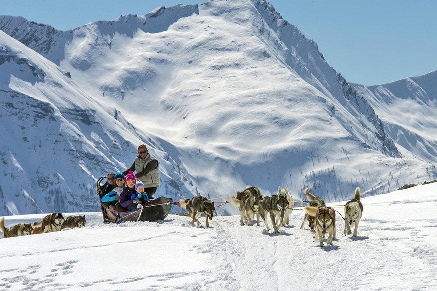 Jolijt op de hondenslee © Toerisme Orcières / Gilles Baron