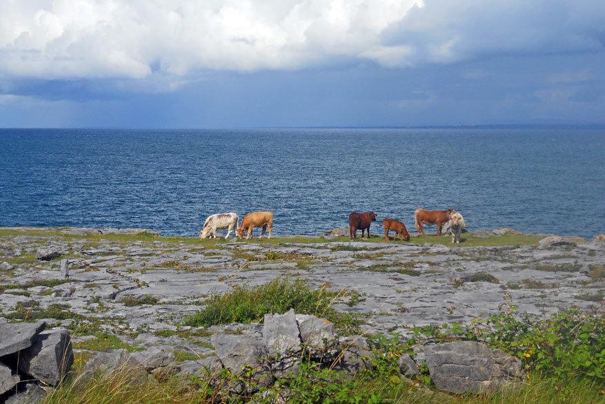 De omgeving centraal in Burren doet denken aan taferelen uit Lord of The Rings