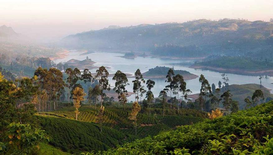 Sri Lanka: theeplantages