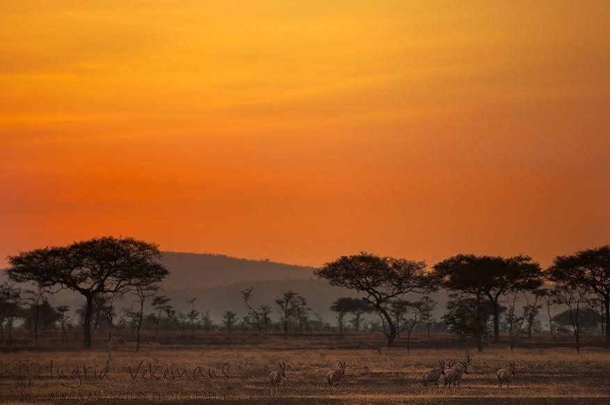 Op avontuurlijke fotosafari in Noord-Tanzania