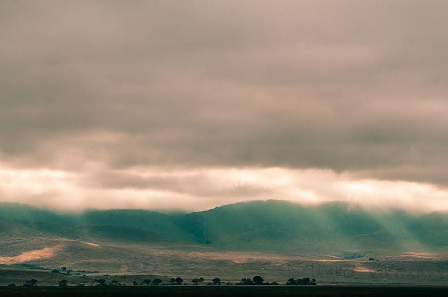 Dag 7: we ontwaken erg vroeg op de Ngorongoro Crater zodat we als eerste aan de ingang van dit unieke reservaat staan. Onze discipline wordt beloond: wij krijgen een schitterend beeld voorgeschoteld van uitwaaierende zonnestralen die het dicht wolkendek doorbreken.