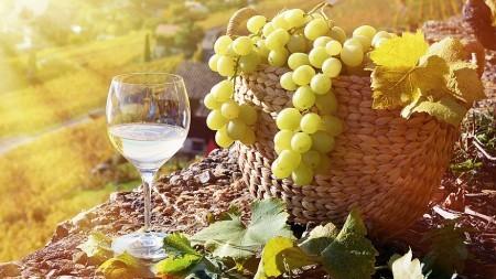 Verblijven bij Vlaamse wijnboeren in Gard