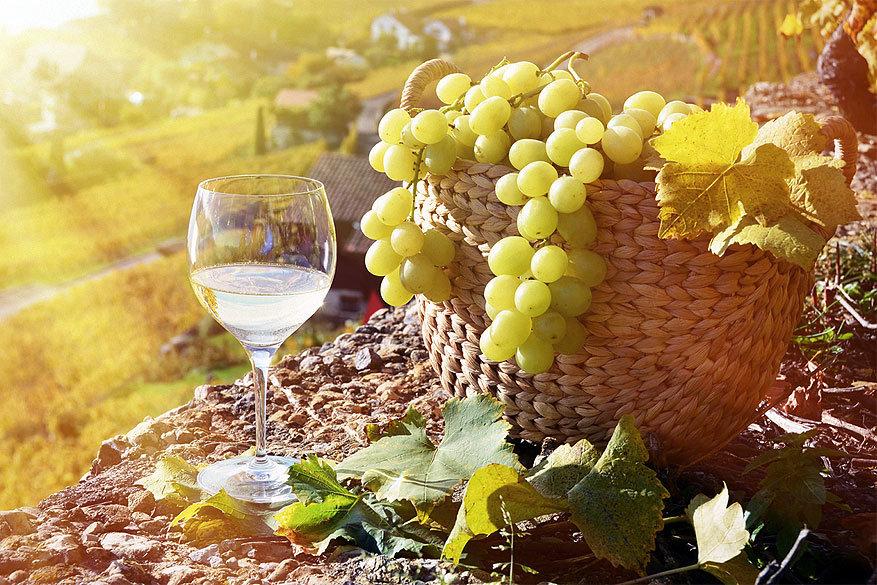 Vlaamse wijnboeren in Gard