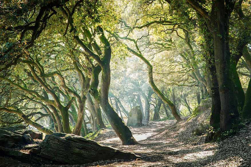 La Vendée: de bossen van l'Île de Noirmoutier.