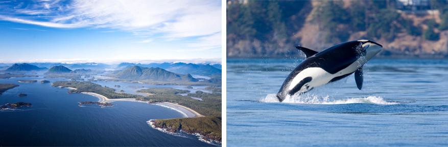 Canada: Vancouver Island waar je orka's kan zien