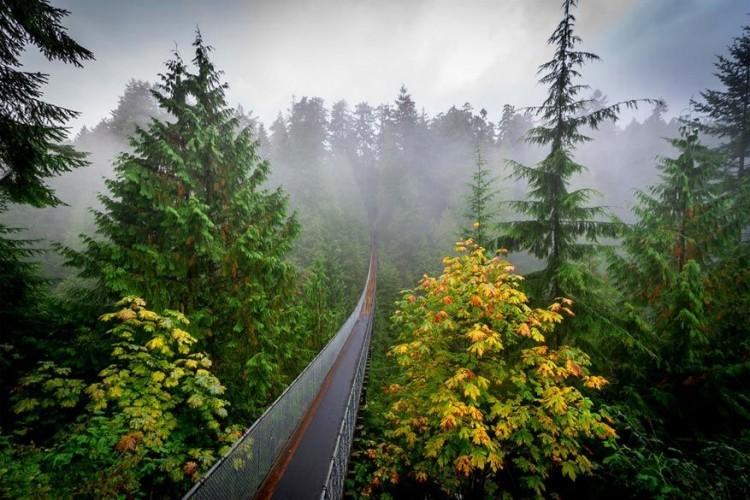 Capilano hangbrug in Canada: een van dé attracties in Vancouver. De brug, gebouwd in 1889, hangt op 70 meter hoogte vast aan een paar stokoude bomen boven de Capilano rivier. Wie over het 137 lange gevaarte wandelt, zou elk zuchtje wind voelen. Er even op blijven staan en kijken naar de bossen en bergen rond Vancouver is dan wel weer een onvergetelijke ervaring. © Richard Thrasher