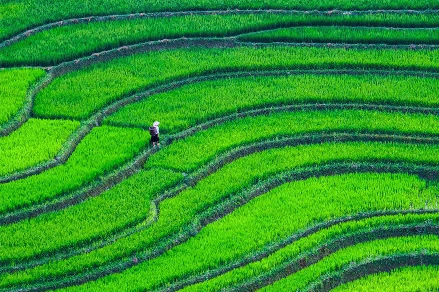 Laat je betoveren door de rijstterrassen tijdens een cruise op de Mekong