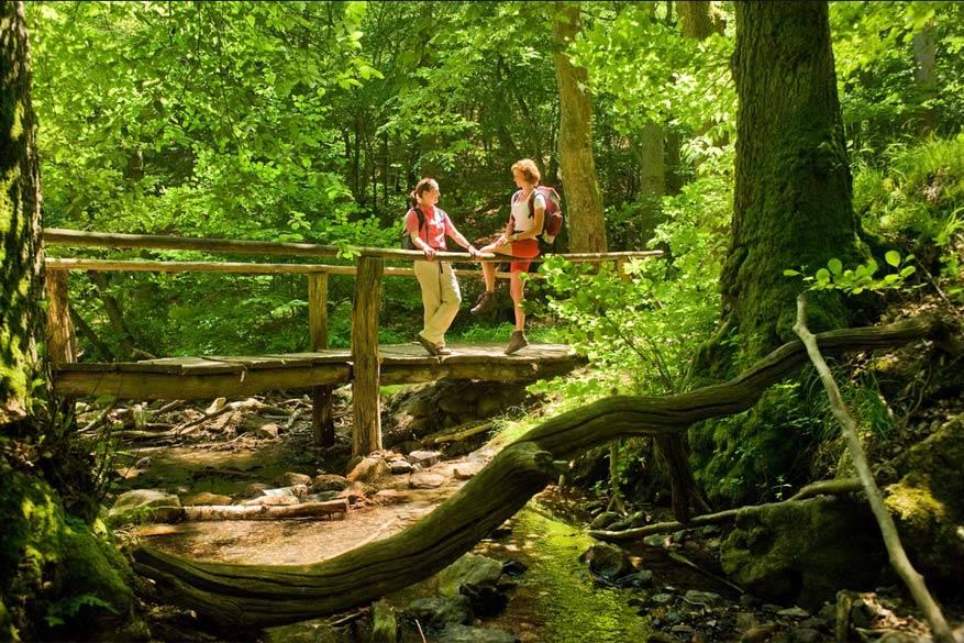 Hunsrück: een knappe wandelregio dankzij de Soonwald