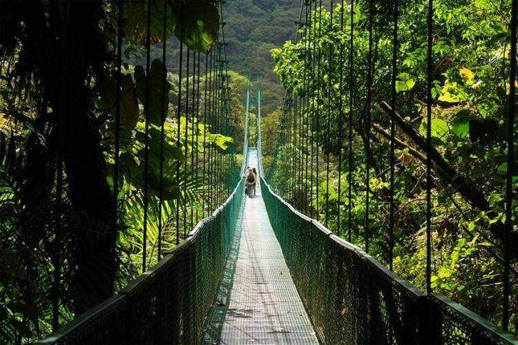 Selvatura-hangbruggen, Costa Rica: het Cloud Forest Reserve in Monteverde is een van 's werelds meest complexe ecosystemen. De nevelwouden van Monteverde bewaren zo'n honderden soorten planten en dieren, zelfs bedreigde soorten komen hier nog voor. Een wandeling leidt je langs de bekende Selvatura-hangbruggen, de langste hangbruggen van Costa Rica. Samen hebben ze maar liefst een lengte van 3 km en elke hangbrug kan tot 80 mensen dragen. © Speed of Life Tours