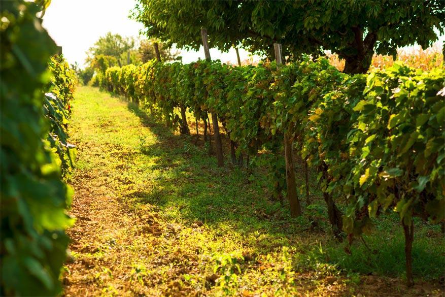 Wijn proeven in Servië: Aleksandrovic
