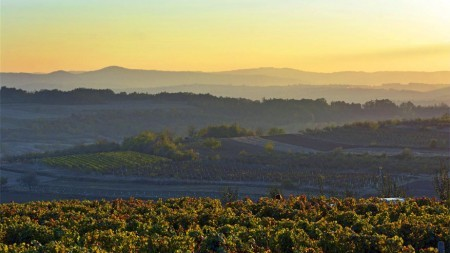 Hier proef je de lekkerste Servische wijnen