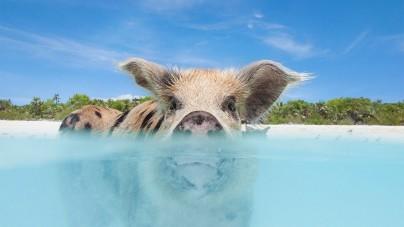 7 reistips die je dierenhart sneller doen slaan