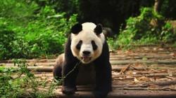 Hier spot je 5 bedreigde diersoorten