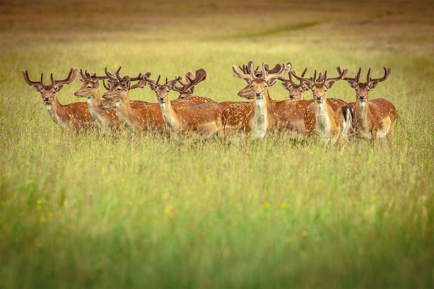 Kies een touroperator met respect voor fauna en flora