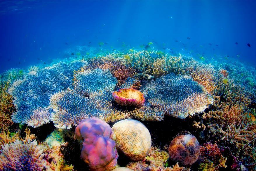 Neem geen stukje koraal mee als je gaat duiken