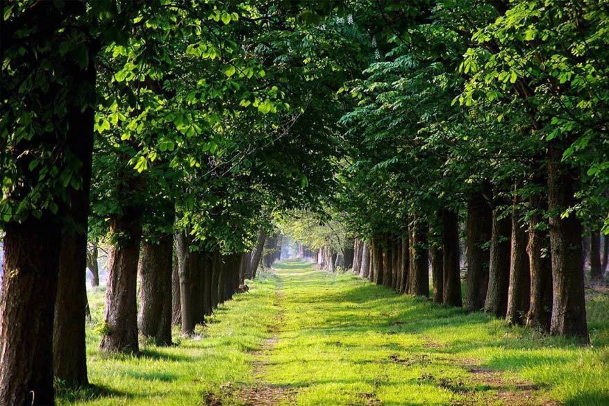 Friesland: tot rust komen in de natuur