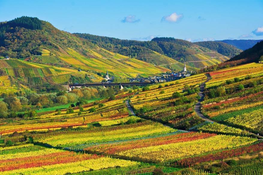 Moezel: de wijngaarden van Bremm op de heuvels