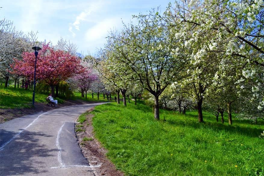 Praag: zomerse bloesembomen in het park