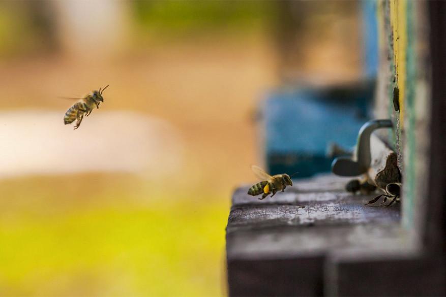 Bijen in Slovenië in actie