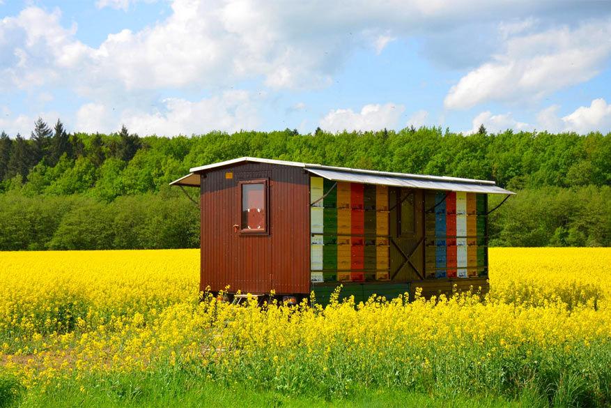 Bijen in Slovenië: typische gekleurde bijenkasten