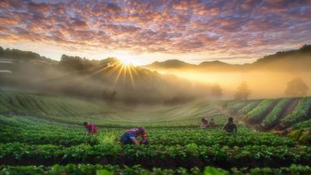Beleef Thailand zoals een local