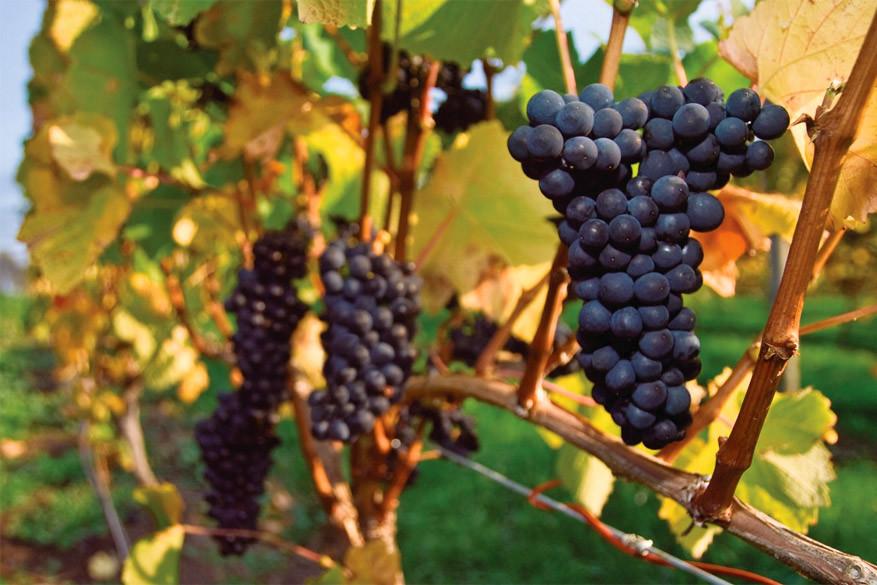 Wijn proeven in Slovenië of Frankrijk