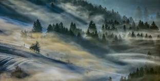 Hypnotiserende bossen in Slovenië