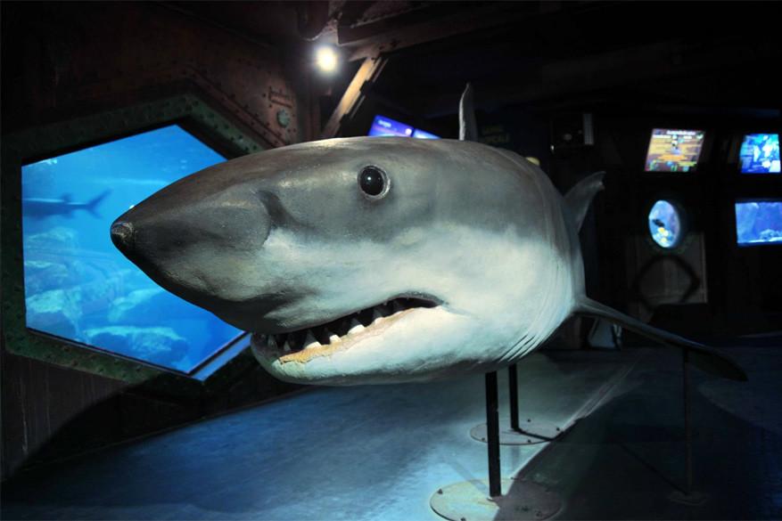 Amnéville: haaien spotten in de Aquarium van Amnéville