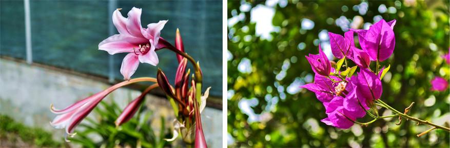 Kopenhagen: Botanische Tuin