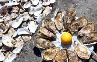 De heerlijke oesters uit Cancale zijn wereldwijd bekend. De Franse koning stuurde in zijn tijd al zijn boden naar de kleine havenstad tussen Saint-Malo en de Mont Saint-Michel om de zeer begeerde oesters aan het hof in Parijs te laten bezorgen. Sinds 1994 werd Cancale benoemd als 'site remarquable du goût' voor de bijzondere kwaliteit van haar oesters. © Shining Workshop