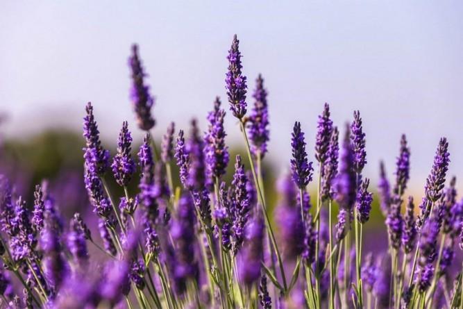De Provence combineert adrenaline met genieten