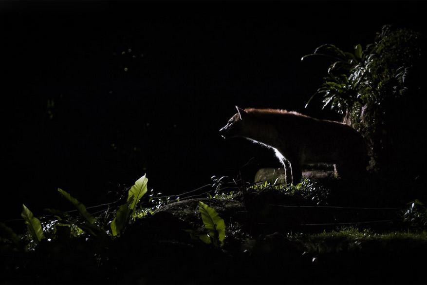 Singapore: op zoek naar nachtdieren tijdens de nachtsafari