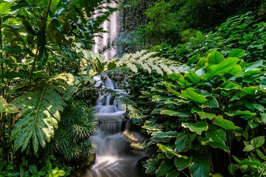 Singapore: de waterval in Jurong Bird Park