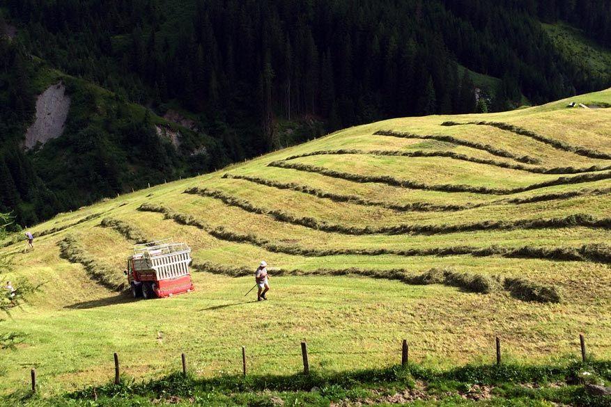 Wipptal: de lokale landbouwer is aan het hooien