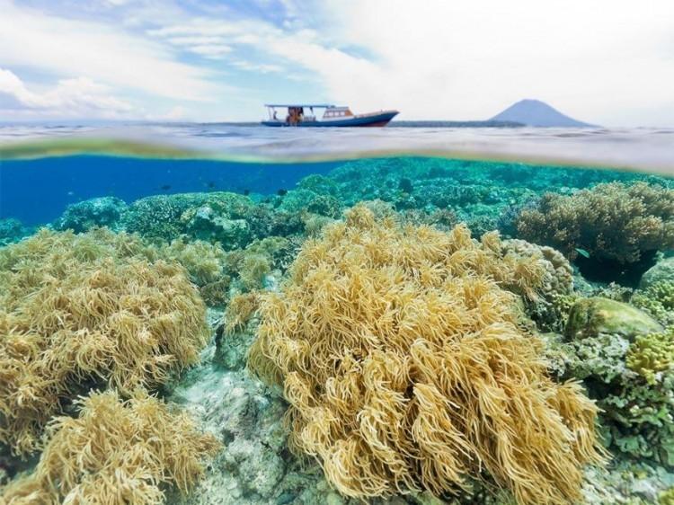 Bunaken Marine Park, Indonesië